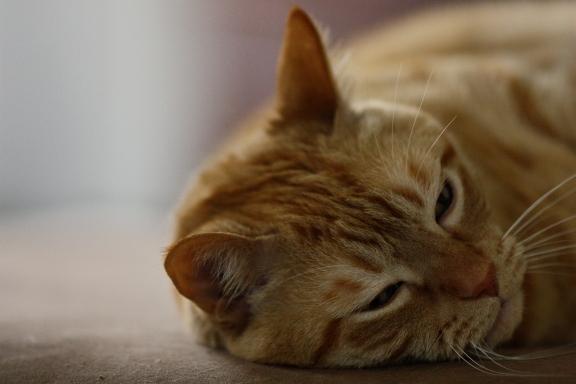 Go_to_Sleep_BS_by_dutchesscourtney